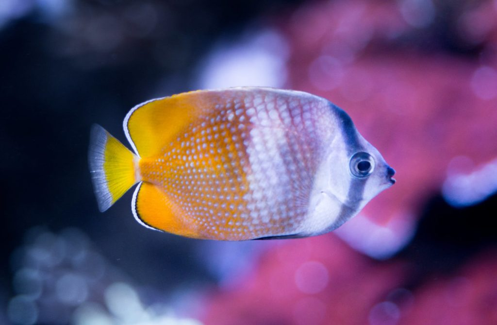 white and yellow fish close up photography